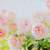 stock ;; florals