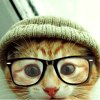 Stock: Hipster kitteh