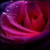 e_jhana userpic