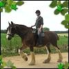 horses: cooper and ben