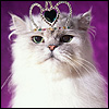 princessoftor: pic#112090268