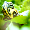 (Taru) stormbound81.wordpress.com: kara the turtle