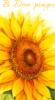 juliet515 userpic