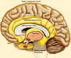 мой мозг!