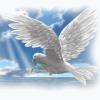 holubice naděje