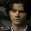 puppy sam