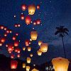 lanternflight
