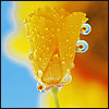 enensteineqy userpic