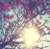 ripepomegranate userpic