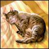 luisakugow userpic