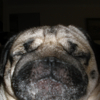 pugglies userpic