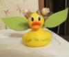 brinnypoo: ducknation