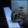 pianopussy