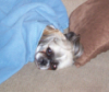 Buddy Blanket