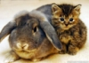 rabbit_cat_grey_5
