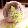Bunny eating plant