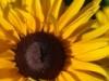 icartoon userpic