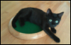 Pets-LydiaDice
