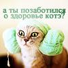 здоровье котЭ