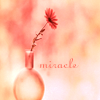 Misc. Miracle