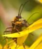 bugsex