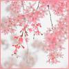 04. Sakura Tree