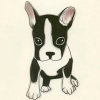 Genevieve: boston terrier