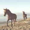 Genevieve: horses