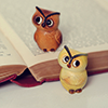 Animals ☆ owls and books!