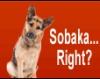 sobaka right?