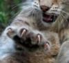 cat_style_p