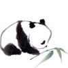 galingale: panda