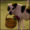 собака с корзинкой