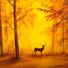 осень лес олень