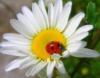 sunshine_girl1 userpic