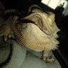 dragon_sagas userpic