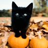 spookycat13 userpic