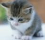 catbreed1 userpic