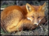 foxenchantment userpic