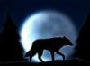 demianwolf