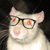 The Nerdy Rat
