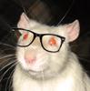 alpha_rat userpic