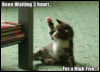 Kitty, high five