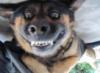 собачья улыба
