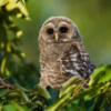 morning_owlet userpic