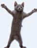 танец, я, кошка