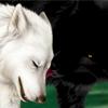 [♥ B.H.P No.2 ♥] Kutea: Wolf