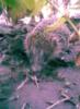 pr0100tuk userpic
