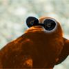 Davesprite: Coolest Crow