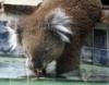 negative_koala userpic